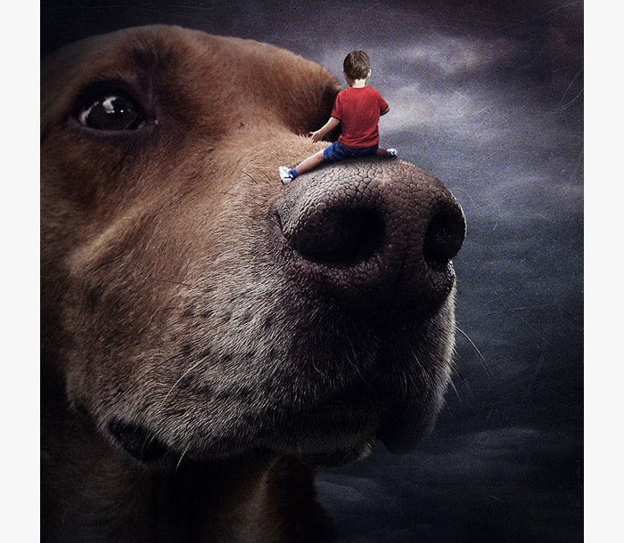 Photo-contest-Rescue-help-dogs-1