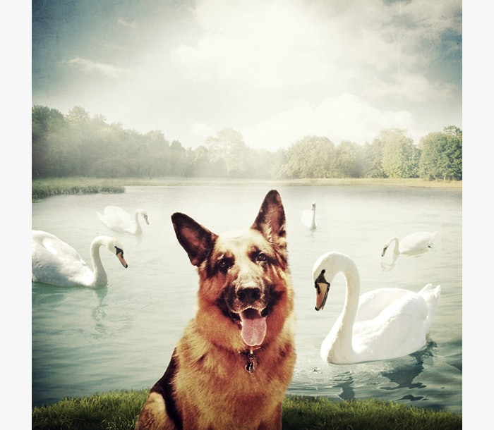 Photo-contest-Rescue-help-dogs-2