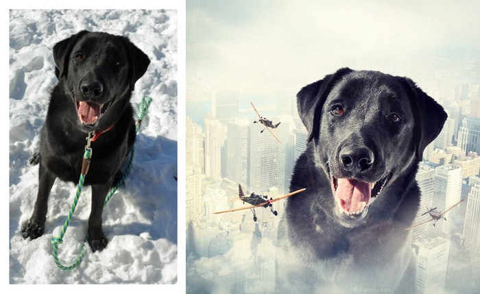 Photo-contest-Rescue-help-dogs-6