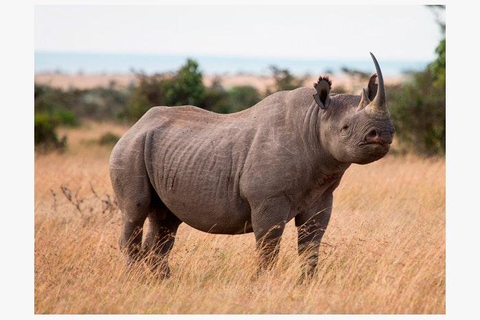 Photo-contest-Rescue-rhinos-1