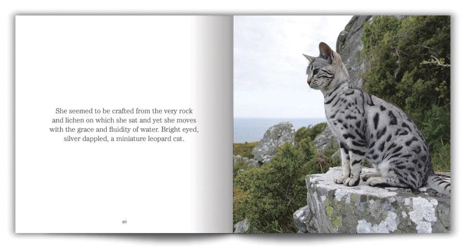 cat_walk_02