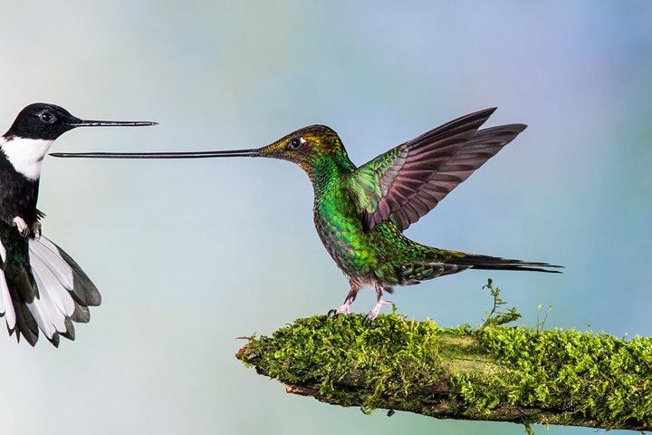 wildlife-photographer-year-2014 (4)