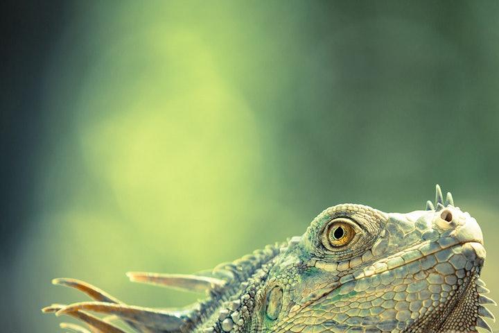 wildlife-photographer-year-2014 (7)