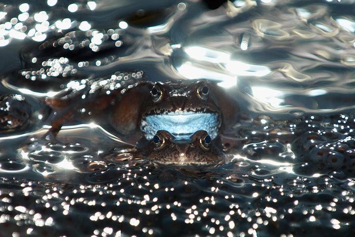wildlife-photographer-year-2014 (8)