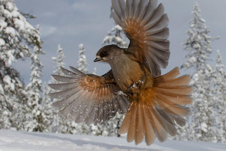 wildlife-photographer-year-2014 (9)