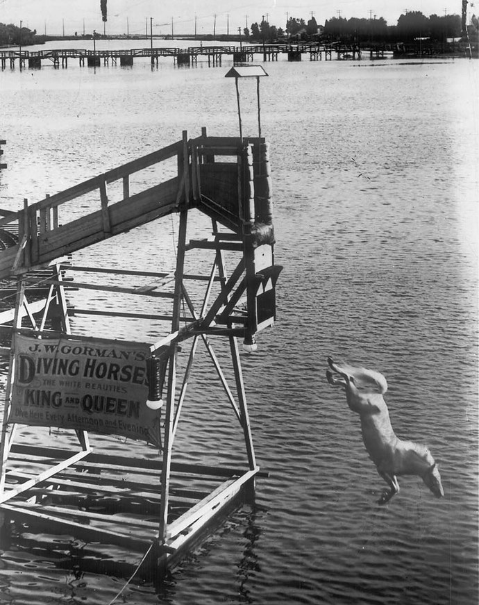 Diving horse1908City of Toronto ArchivesFonds 1244, Item 192