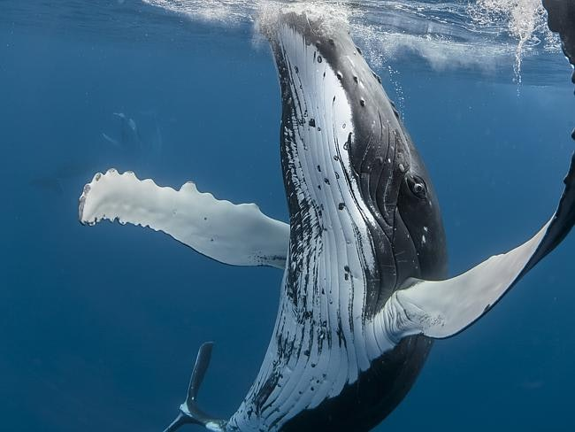 whales_05