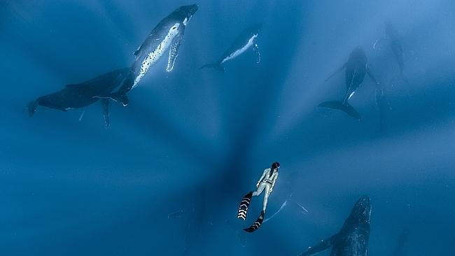 whales_06
