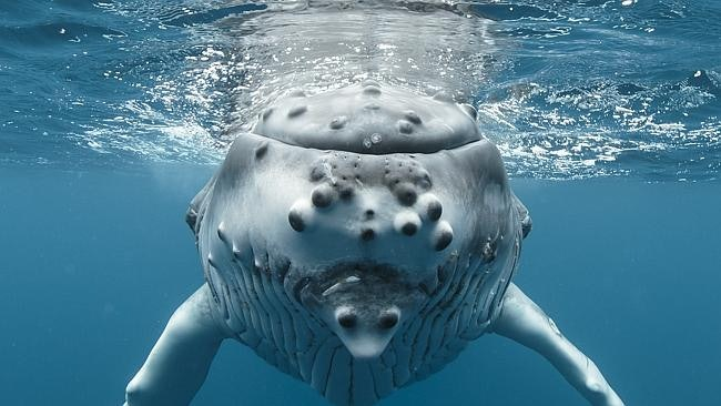 whales_08