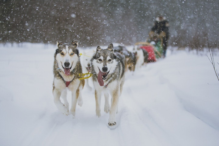 Another Name For Dog Sledding