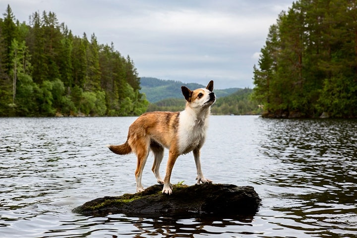 dog_11