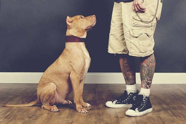 BrianBatistaPhotography-20120930-TattoosAndRescues-Sarge-1