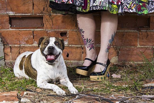 BrianBatistaPhotography-20121111-TattoosAndRescues-Dexter-1