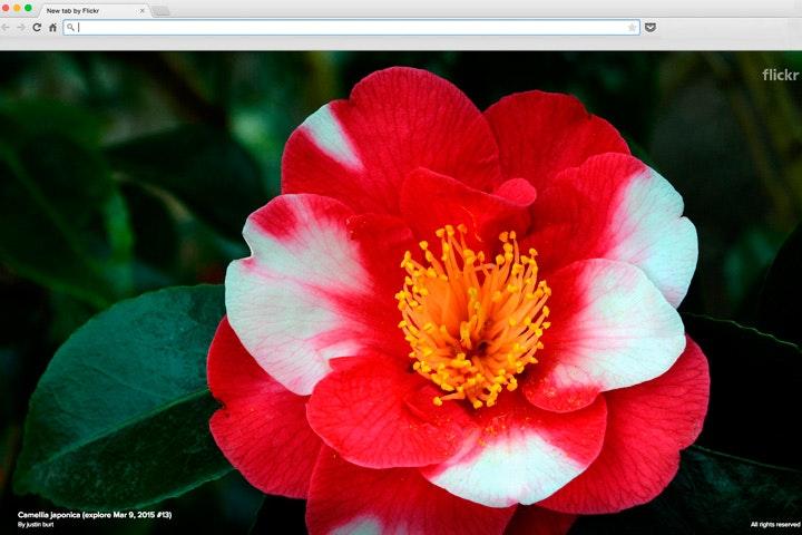 flickr04