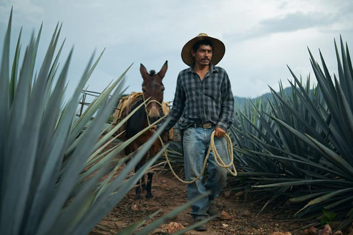 cuervo single women For tequila lovers  cart toggle  jose cuervo tequila extra anejo reserva de la familia  del maguey mezcal san luis del rio single village (750ml) $9689.