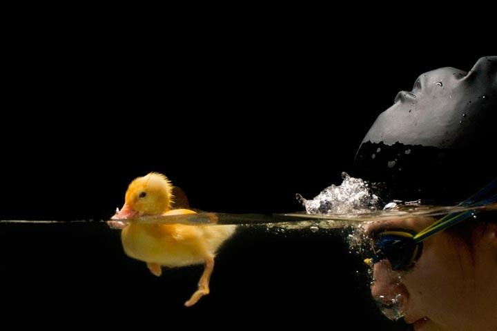 Duck_03