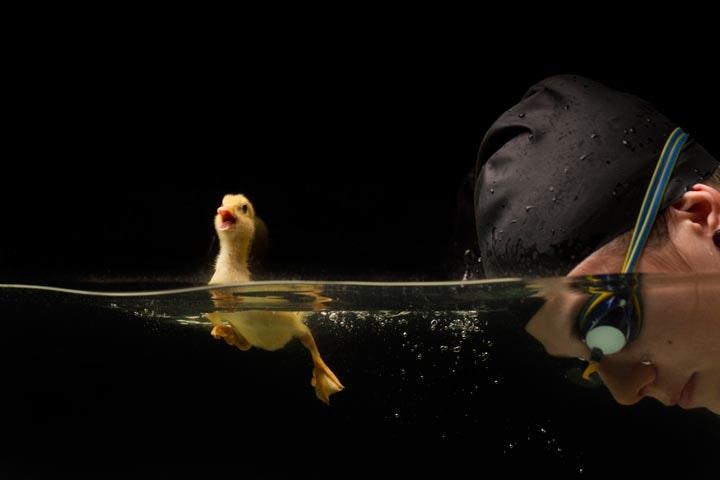 Duck_07