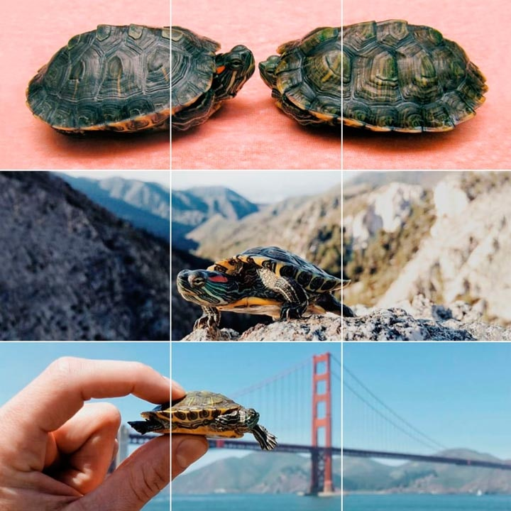turtletuesday_02