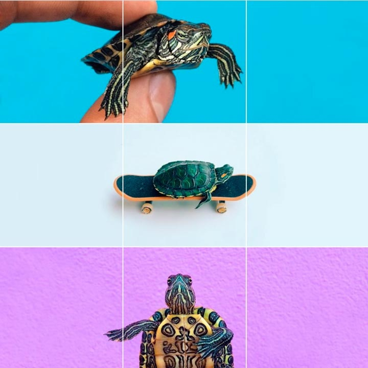 turtletuesday_04