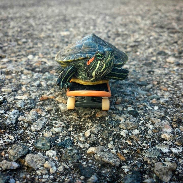 turtletuesday_05