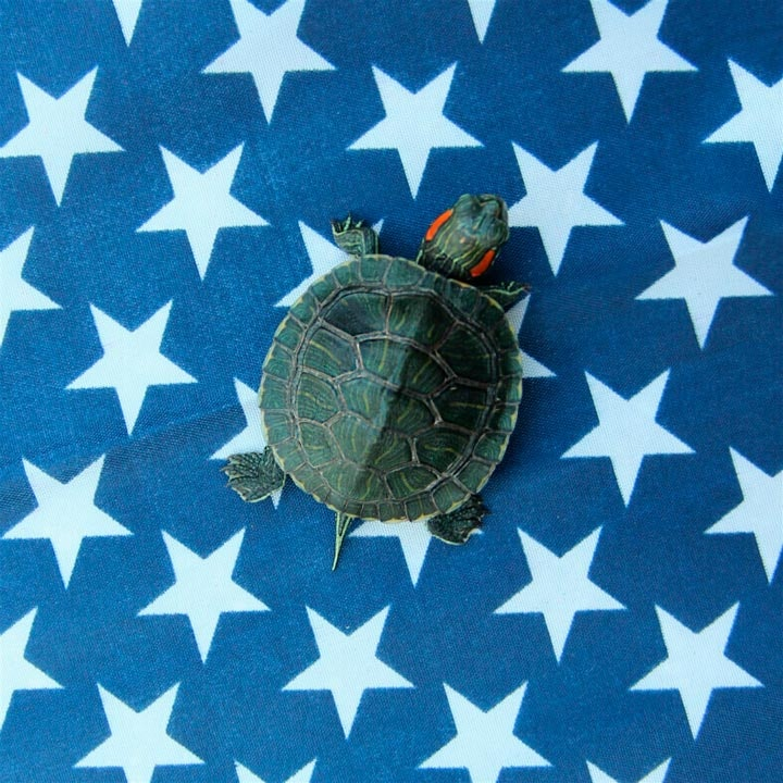 turtletuesday_07