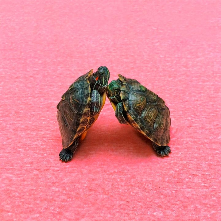 turtletuesday_09