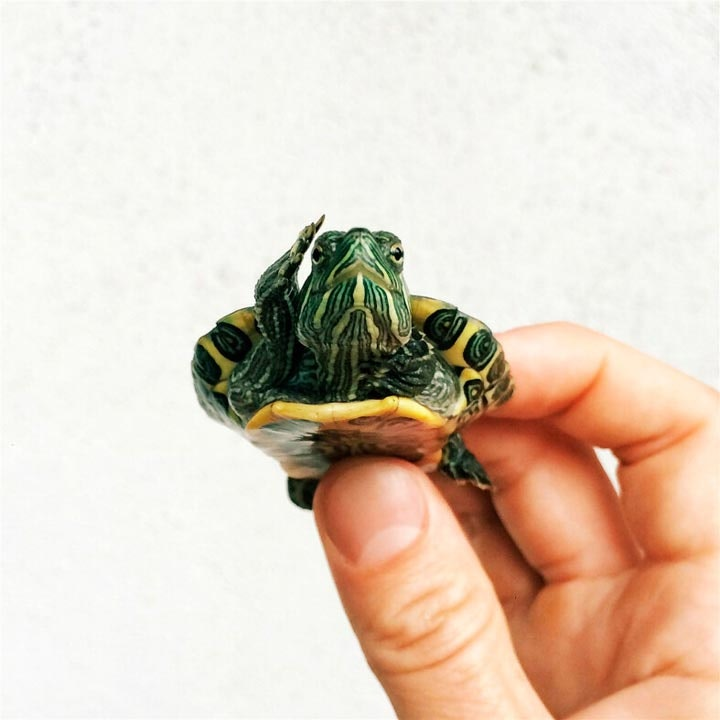 turtletuesday_10