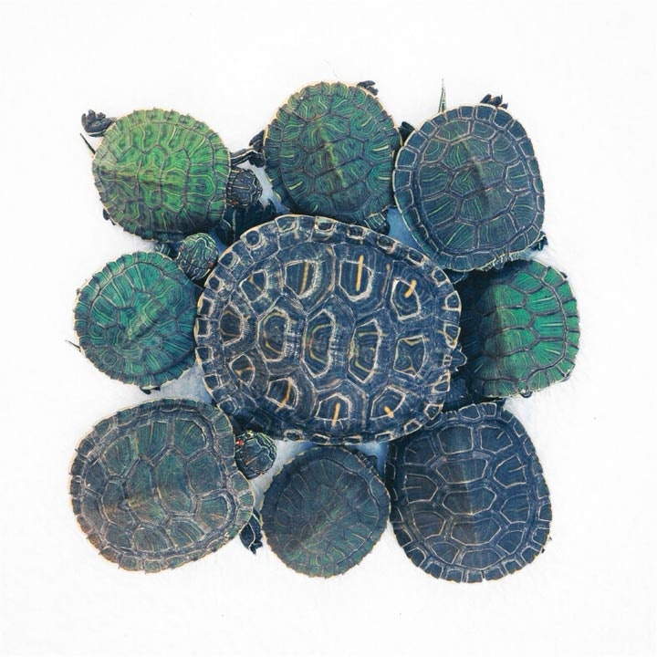 turtletuesday_13