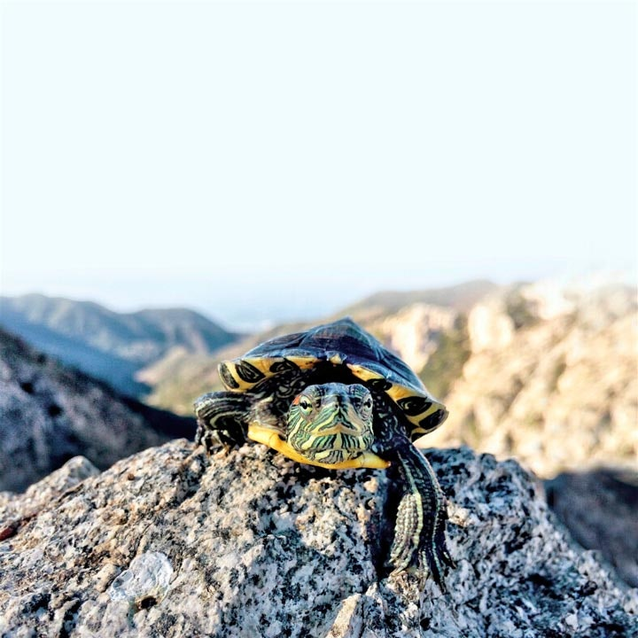 turtletuesday_15