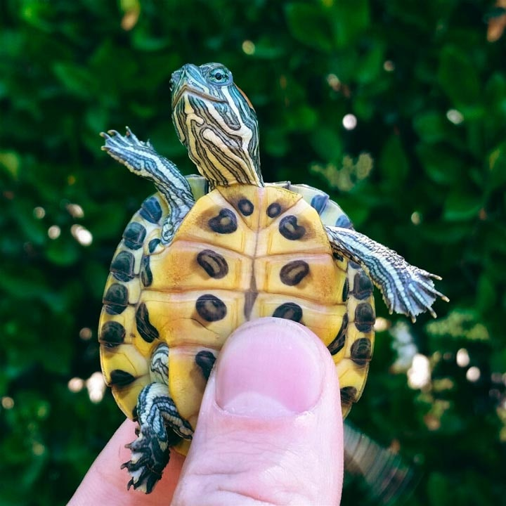 turtletuesday_16