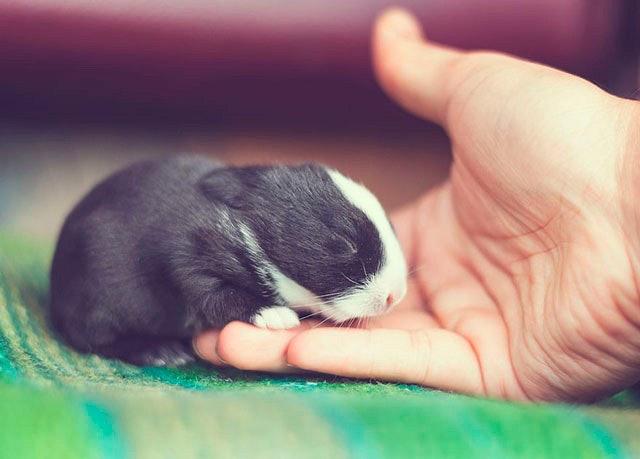 bunny_07