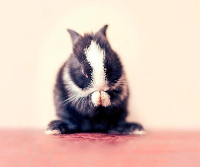 bunny_12
