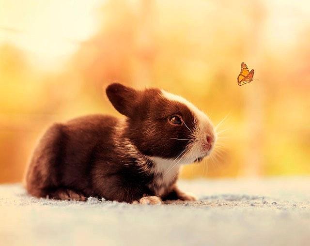 bunny_13