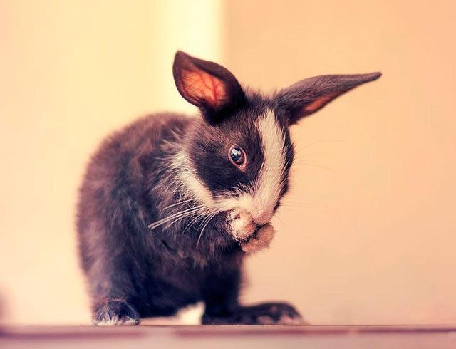 bunny_16