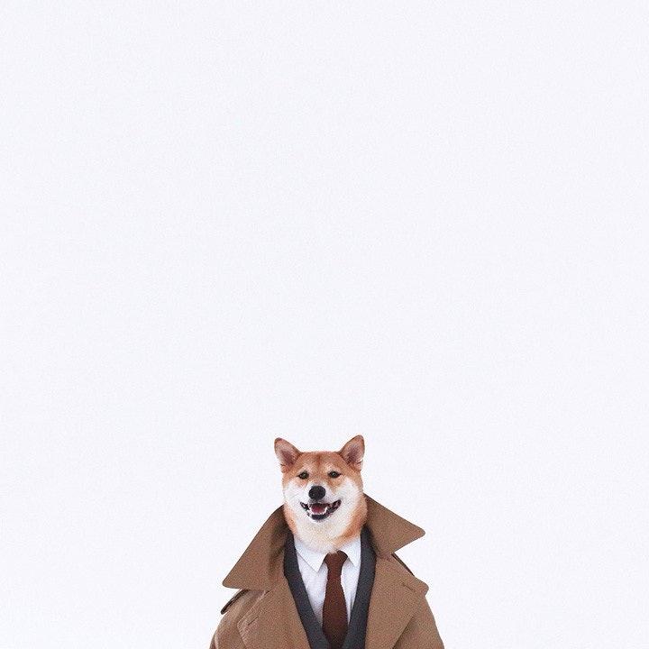 mensweardog_05