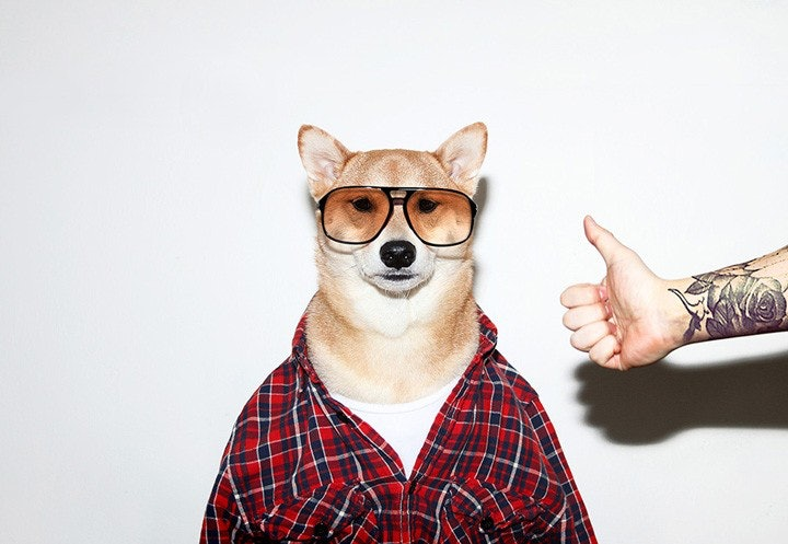 mensweardog_06
