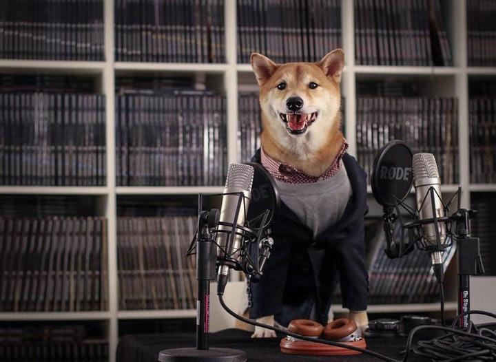 mensweardog_10