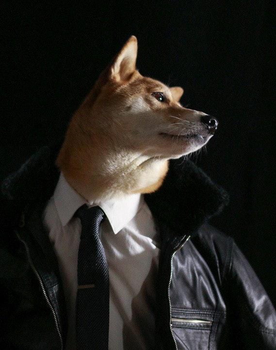 mensweardog_14