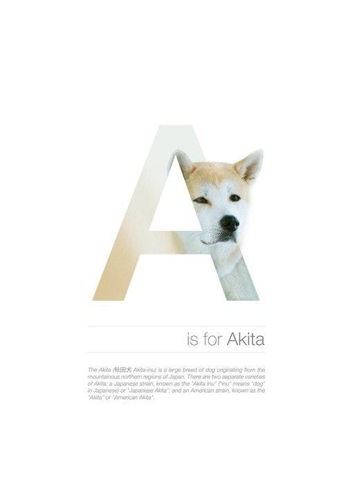 Alphabetdog_01