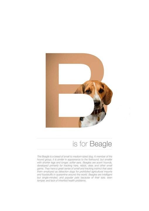 Alphabetdog_02