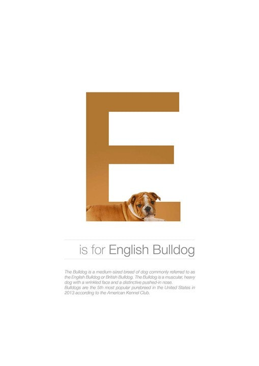 Alphabetdog_05