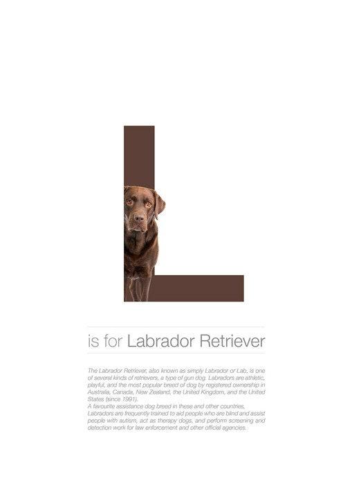 Alphabetdog_12