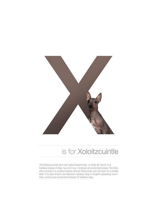 Alphabetdog_24