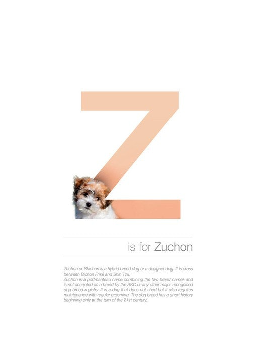 A Designer Created an Illustrated Alphabet of Dog Breeds — Bird In