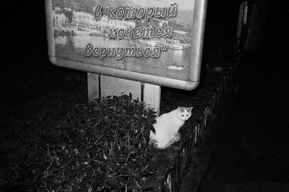 Tsvetkov_15