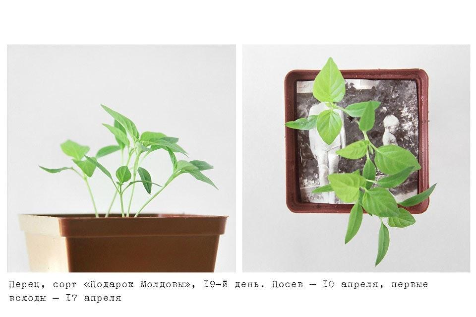 anastasiya-bogomolova-portfolio-trava-01