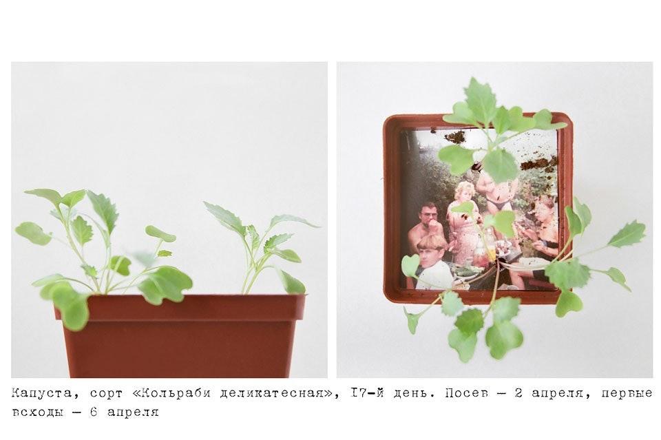 anastasiya-bogomolova-portfolio-trava-03
