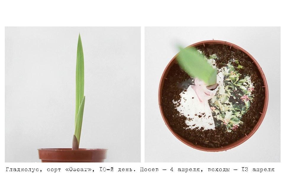 anastasiya-bogomolova-portfolio-trava-07