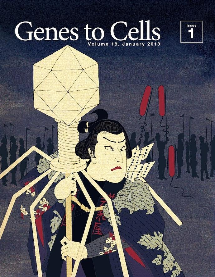 07_genes