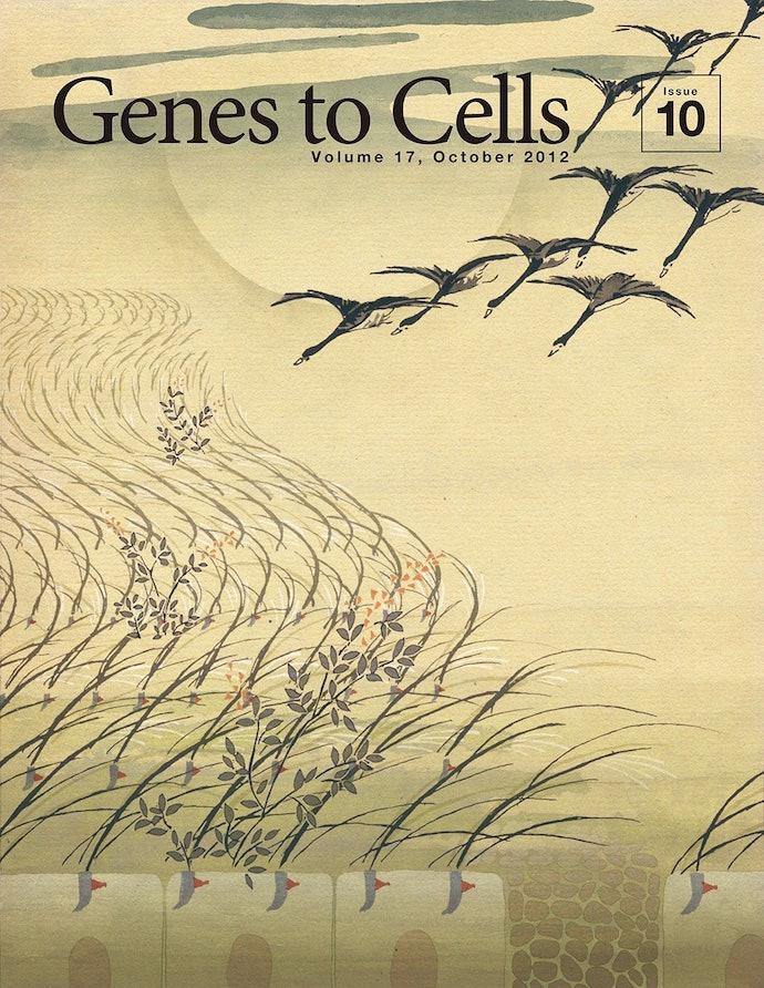 13_genes